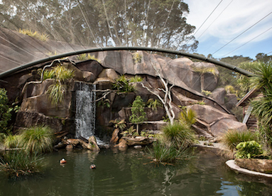 Auckland zoo te wao nui area project h2o systems ltd for Pool design auckland